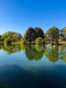 calm body of water near green-leafed trees