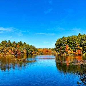 green and brown trees beside body of water under blue sky during daytime